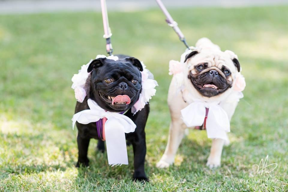 petfriendly-weddingchapel-sunshinecoast